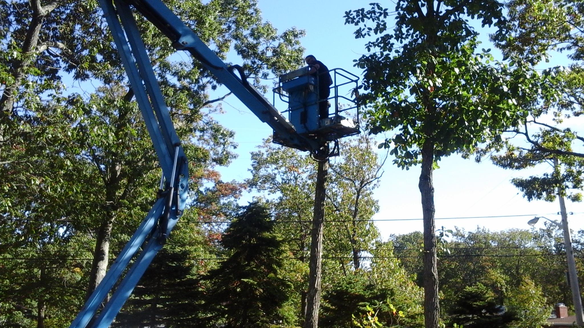 Tree Service by MJM Property Maintenace